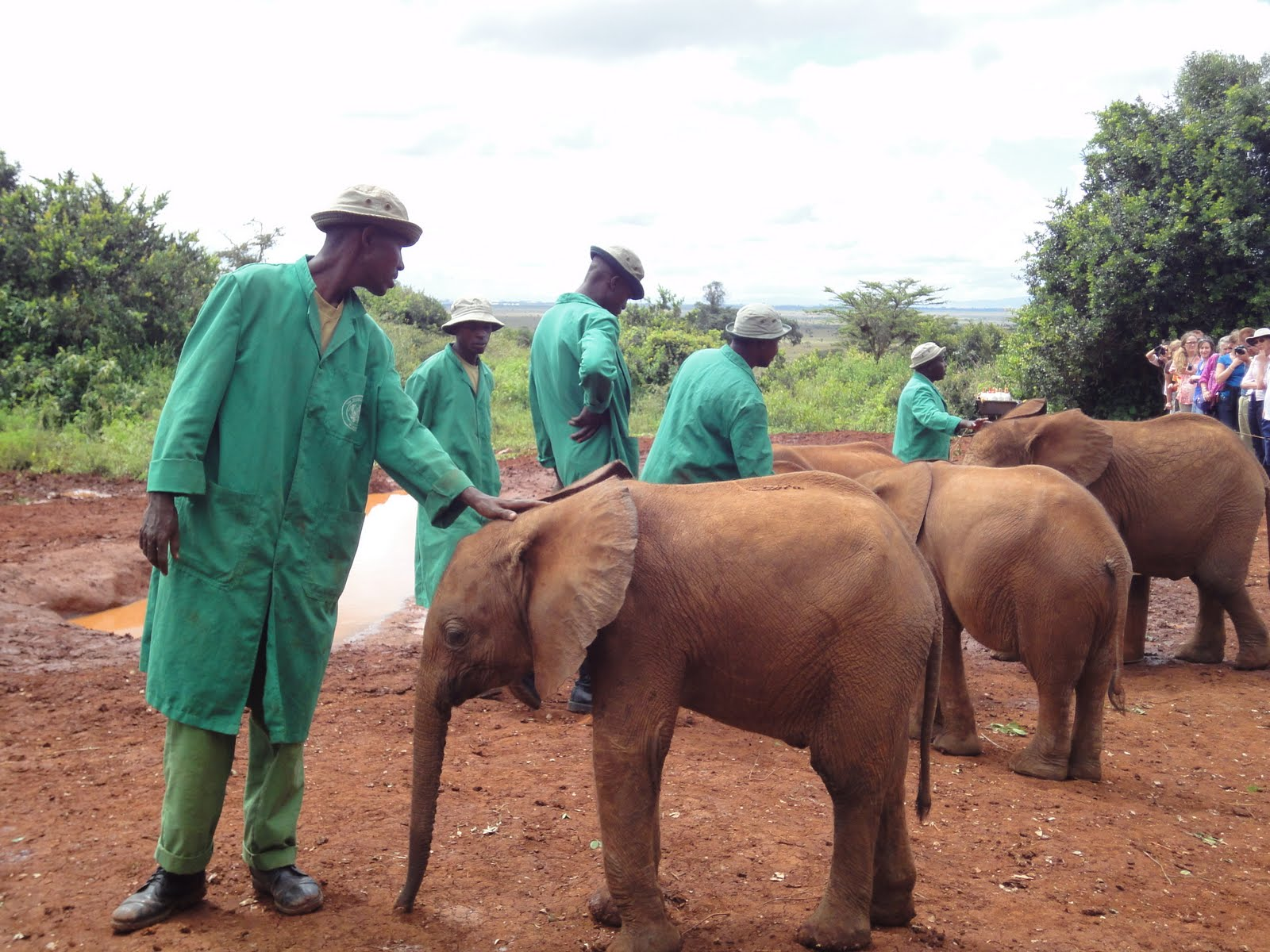 Daphne Sheldricks ELephant Orphanage Nairobi